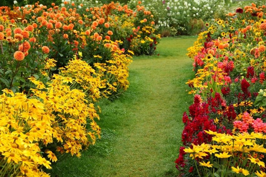 Осенние посадки цветов фото