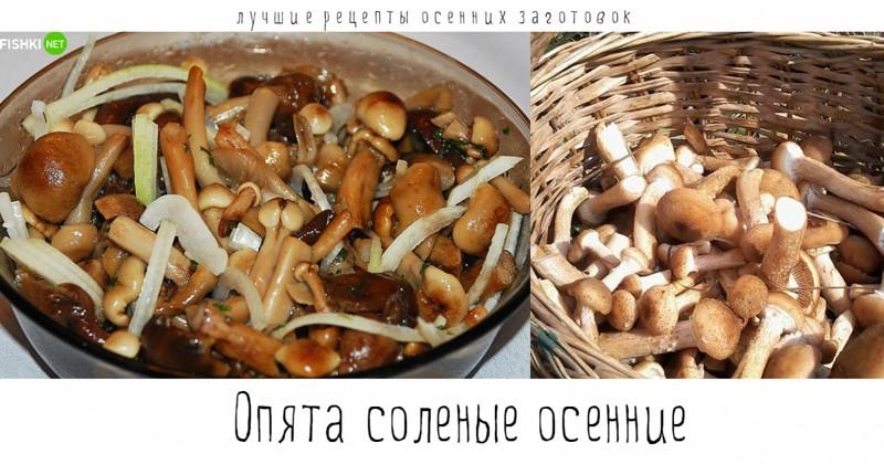 грибы опята на зиму рецепты приготовления