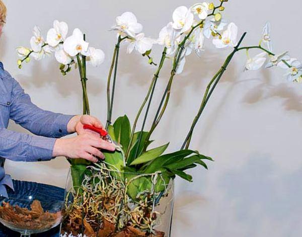Значение орхидеи по фен шуй