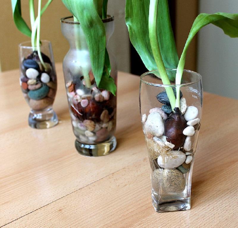 Тюльпаны в стакане вырастить