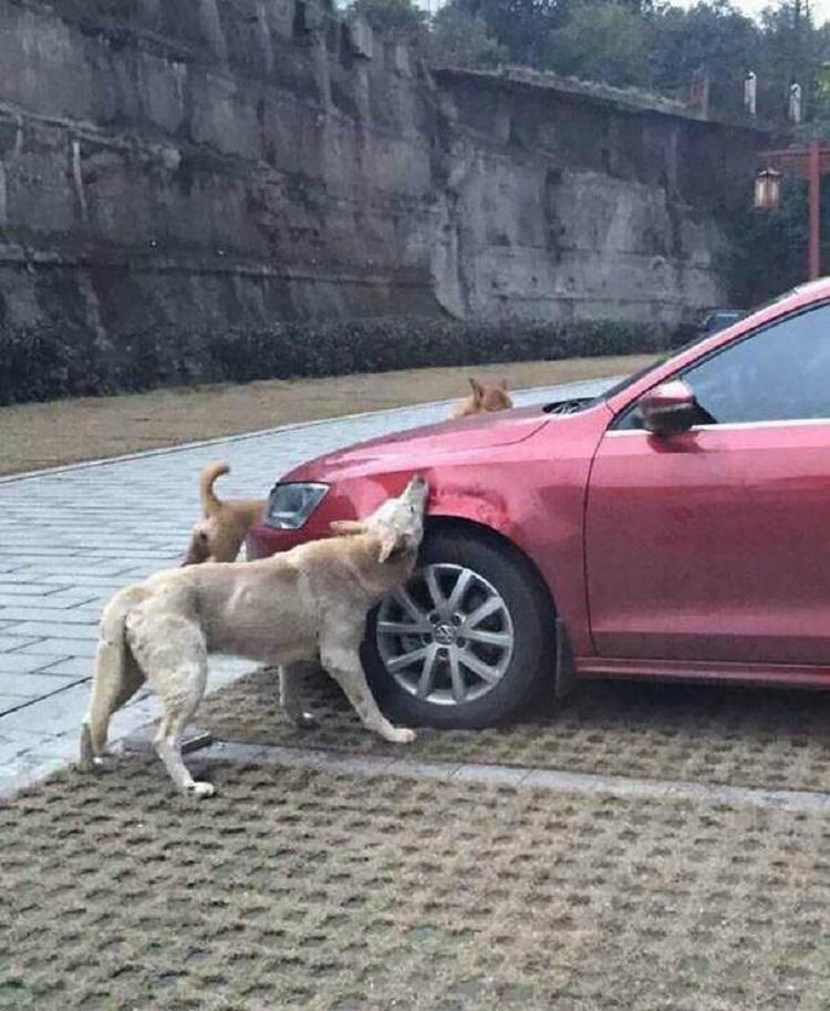 Месть бродячих псов за пинок…