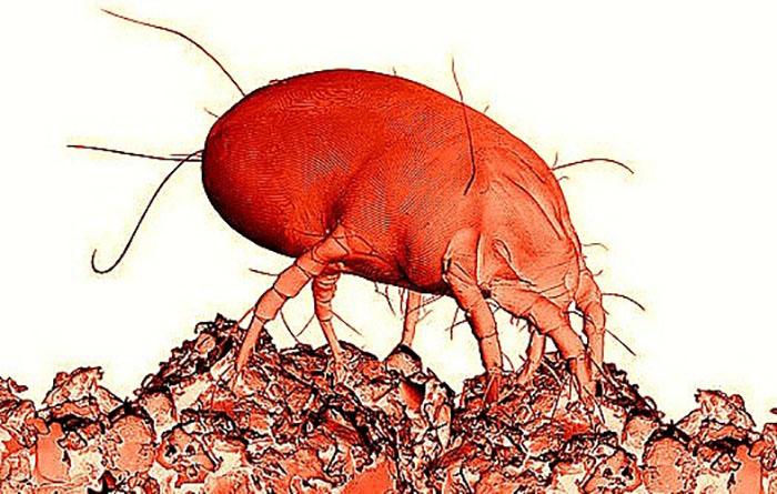 средство от паразитов intoxic цена