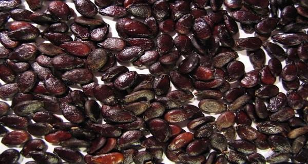 Вот что могут сделать семена арбуза для вашего здоровья! Прочитав ЭТО вы никогда не выплюните их снова