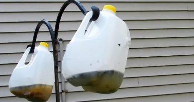 Как собственноручно сделать эффективную ловушку для мух за копейки. Результат впечатляет!