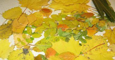 Собираю все осенние листочки… Создаю из них красоту.