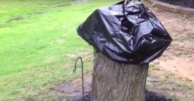 Муж наконец-то спилил засохшее дерево! Но когда женщина спустя 2 недели сняла с пенька пакет, то увидела это!