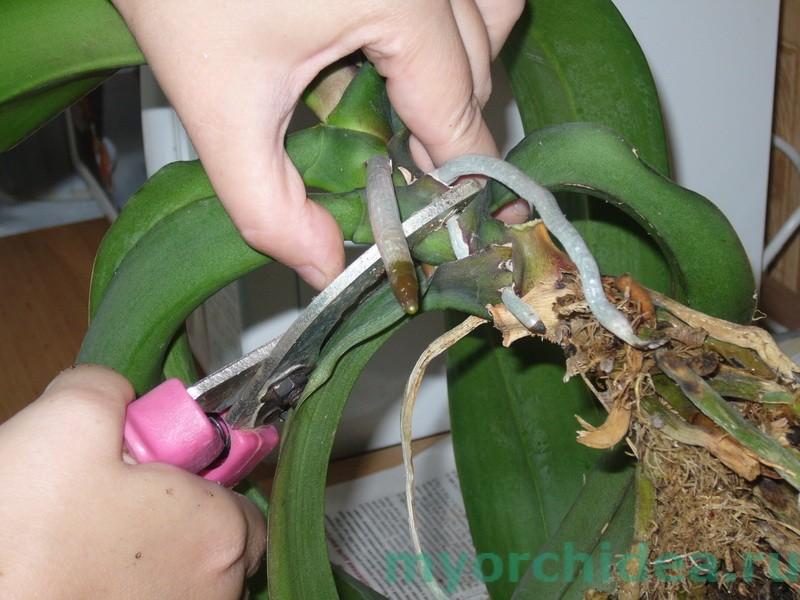 Сам своими руками горшки для растений фото 284