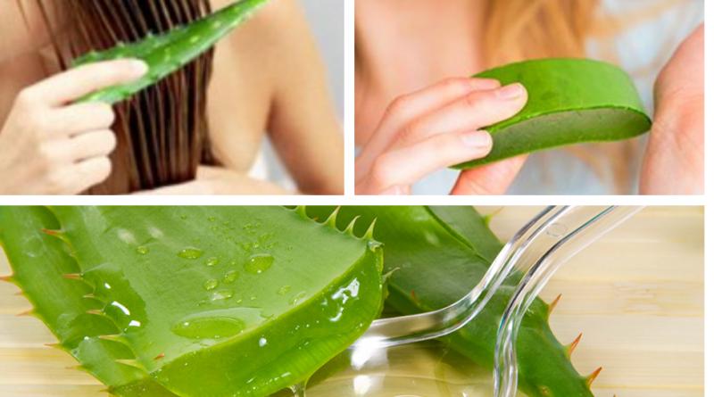Уникальность сока этого растения в том, что оно способно угодить всем типам кожи и оказать пользу каждому из них.