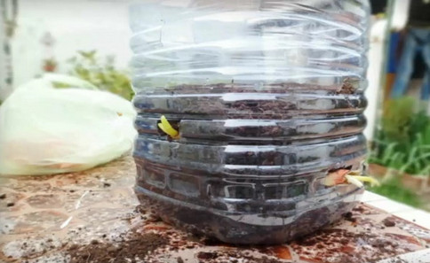 Восхитительный трюк с бутылкой: круглый год собираю урожай зеленого лука!