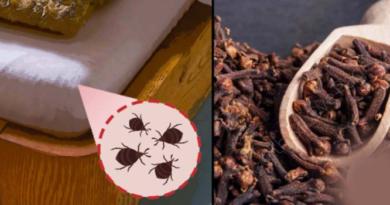 11 природных средств для устранения клопов в кровати – качественные рецепты включены!