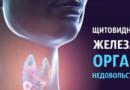 Щитовидная железа: Орган недовольства…