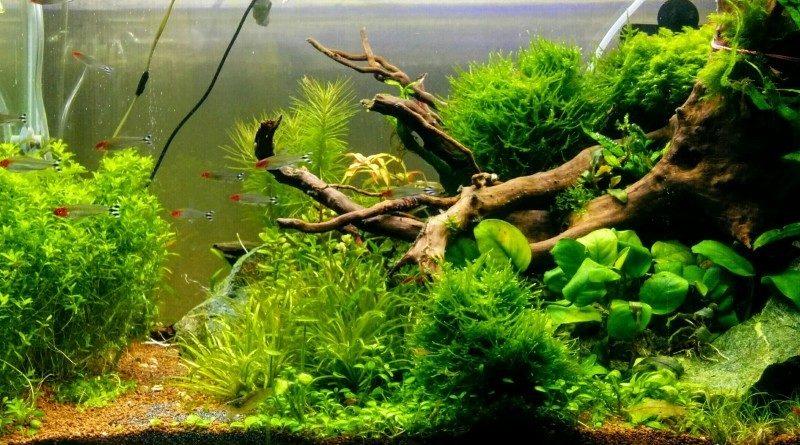 """Что такое """"природный аквариум"""" и почему его стоит поставить в квартире"""